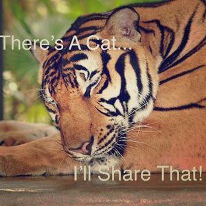 😻Hi Fellow Cat (Pet) People